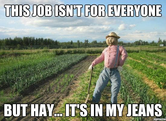scarecrow-meme-hay-its-in-my-jeans