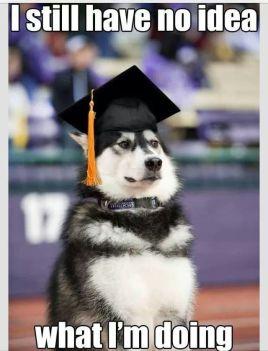Dog-graduation